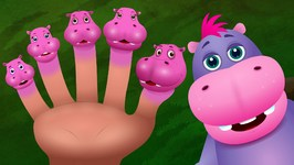 Finger Family Hippo  ChuChu TV Animal Finger Family Songs For Children