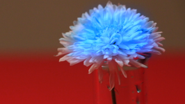 Color Changing Flower