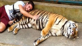 Tiger Selfies Banned in New York