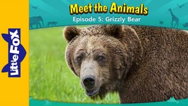 Meet the Animals 5 - Grizzly Bear - Animated Stories by Little Fox