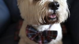 Dog Obedience, Bundanoon, Brigadoon, NSW, Australia
