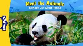 Meet the Animals 26 - Giant Panda - Level 2