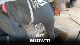Get Meow't: Buried Kittens Saved In Brazil