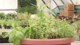 How To Garden A Herb Pot
