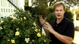 Drift Family Of Roses - Low Maintenance Solution For A Big Impact