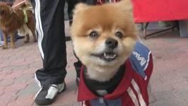 Cutest Dog Contest -In HD
