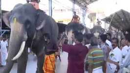 29 Elephants run to kick off Annual Festival