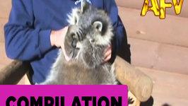 Funny Pets - AFV Musical Compilation