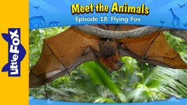 Meet the Animals 18 - Flying Fox - Animated Stories by Little Fox
