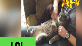 Stressed Cat Loves a Good Massage