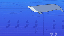 How Loud Can A Blue Whale Be?