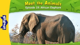 Meet the Animals 19 - African Elephant - Level 2