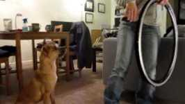 Riley The Dog Jumps Through Hoops For Me