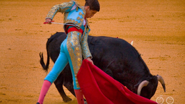 Why Does A Bull Charge At A Red Cloth?