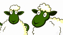 Does A Sheep Grow Wool Every Year?