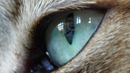 Cute Kitty Close Up