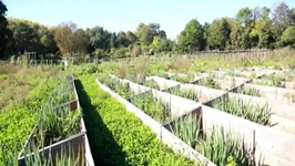 No Gardeners Needed at This Self-Sustainable Garden