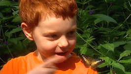 This is Daniel Cook Learning About Butterflies