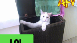 Cat Gets Stuck In Laundry Basket
