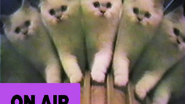 Mirror Cats -  Compilation
