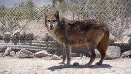 Pet World Insider Wolf Mountain sneak peek
