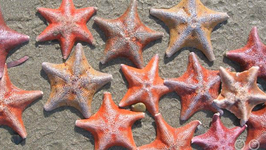 Do Starfish Have Brains?