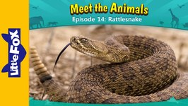 Meet the Animals 14 - Rattlesnake - Animated Stories by Little Fox
