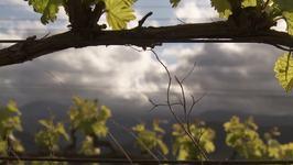 South Africa: Moreson Wine Estate