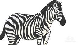 Is The Zebra Black With White Stripes Or White With Black Stripes?