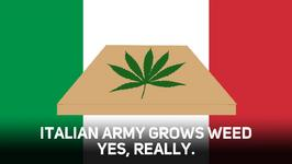 Hang on, did Italy's army just started dealing weed?