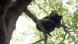 Bear Breaks A Tree House