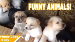 Funniest Animals Around the World