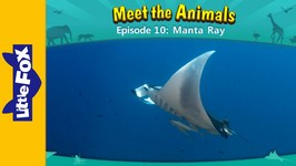 Meet the Animals 10 - Manta Ray - Animated Stories by Little Fox