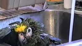 Opera at the Bird Bath- PetTube