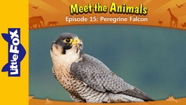 Meet the Animals 15 - Peregrine Falcon - Animated Stories by Little Fox