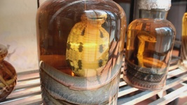 Snake wine: Vietnam's cruelest tourist trap