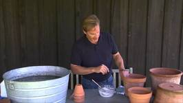 Cleaning Terra Cotta Containers