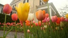 Fertilizing Spring Flowering Bulbs