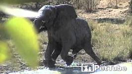 Elephant FAILS to Play It Cool - PetTube