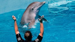 A Tale of Inspiration and Hope at the Clearwater Marine Aquarium