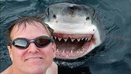 Selfies vs. Shark Attacks- Which is Deadlier?