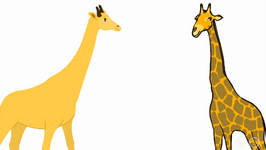 Why Does The Giraffe Have A Long Neck?