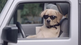 Five Dog Commercials That will Melt your Heart