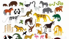 How Did Animals Get Their Names?