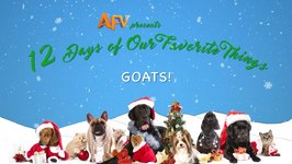 AFV's 12 Days Of Christmas - Viral Video Goats Complete Compilation