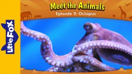 Meet the Animals 9 - Octopus - Animated Stories by Little Fox