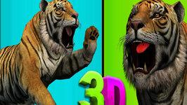 Finger Family 3D  Tiger Finger Family  Animal cartoons Finger Family Nursery Rhymes