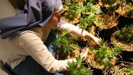 Marijuana Nuns Ignore California Weed-Growing Ban