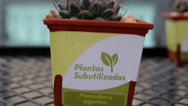 Save the Mexican Flora by Adopting an Endangered Plant
