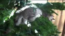 Adorable kittens play in Christmas tree